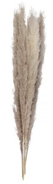 5 Country Wedding pampagrassen donker 90cm