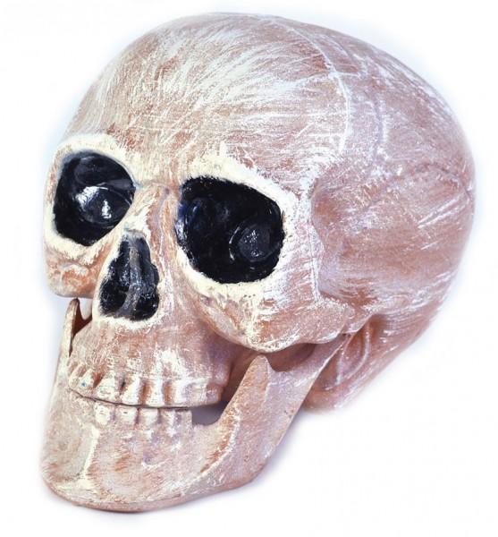 Authentische Deko Totenschädel