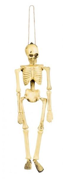 Autentico scheletro da decorazione 40cm
