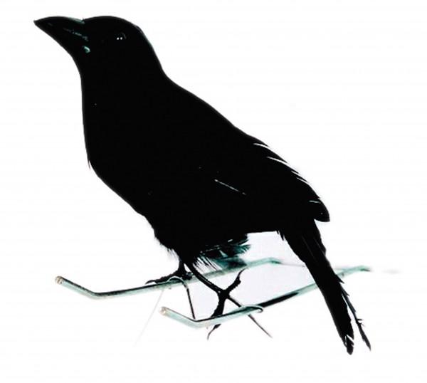 Piccolo corvo nero Halloween