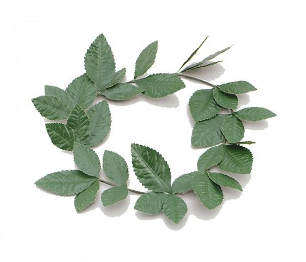 Romeinse lauwerkrans groen