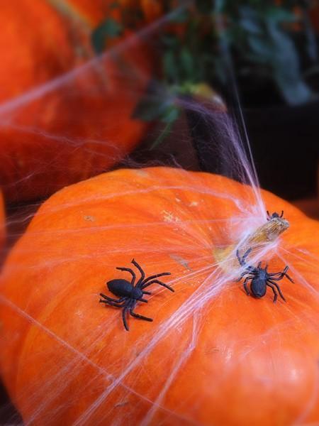 Décoration araignée 10 pièces 3 x 3cm