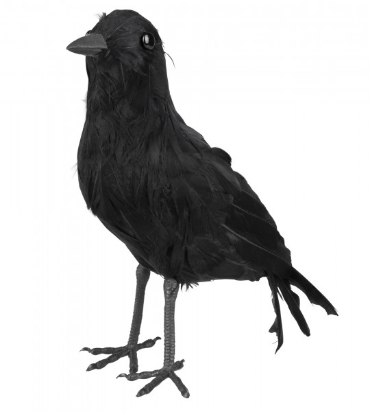 Ravens Castle Halloween Crow
