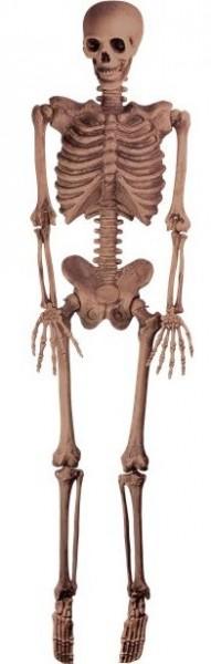 Realistisches Deko Skelett 1,5m