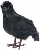 Mysteriöse Nebelschleier Krähe in Schwarz