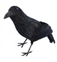 Mysteriöse Schwarze Krähe