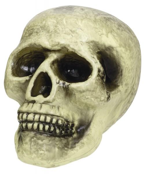 Totenkopf Schädel Vanitas Halloween Dekoration