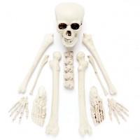 Einzelne Skelett Knochen Teile 12 Stück
