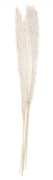 5 Country Wedding pampasgras 90cm