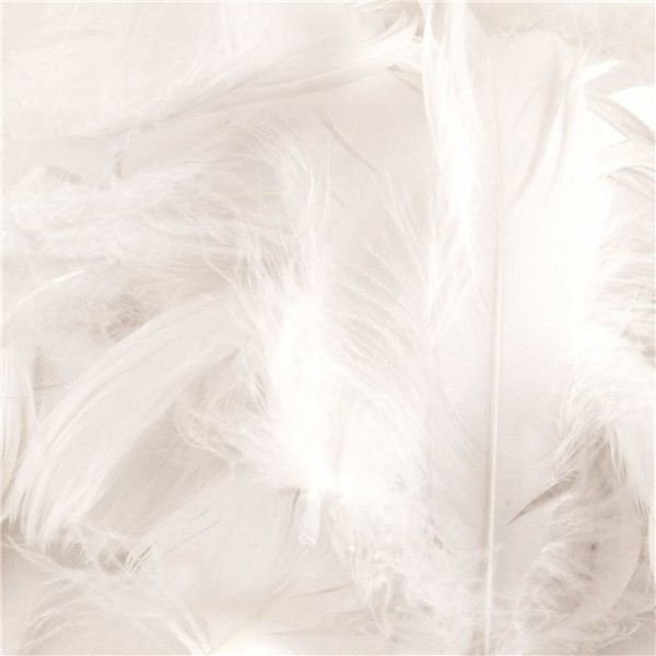 50g white feathers