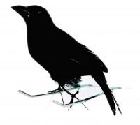 Kleiner schwarzer Halloween Rabe