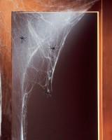 Wild Spiders Spinnennetz mit 20 Spinnen