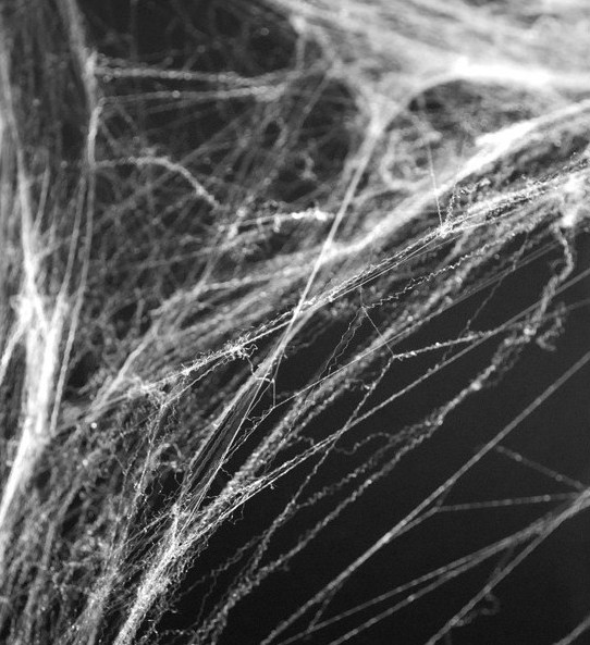 Spinnennetz Halloween Deko mit Spinne